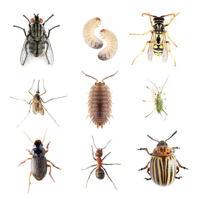 pest control saber exterminating. Black Bedroom Furniture Sets. Home Design Ideas